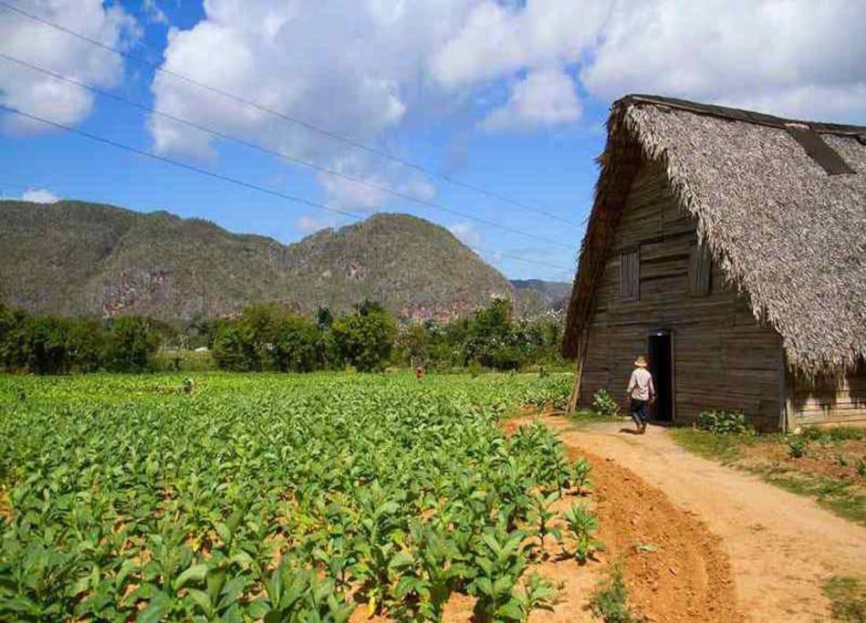 Casa de tabaco en el Valle de Viñales a pocos minutos de la casa
