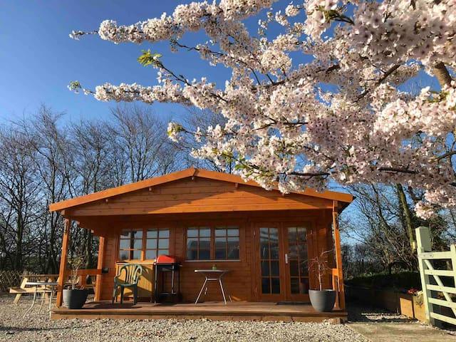 Woodpecker Camping Cabin