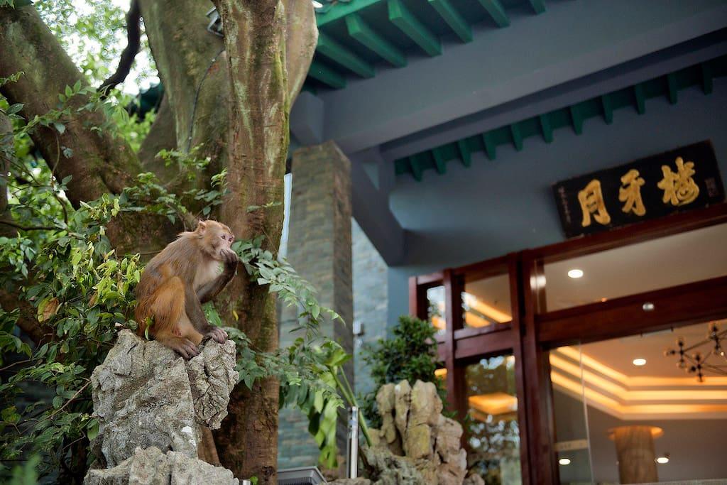 猴儿守大门