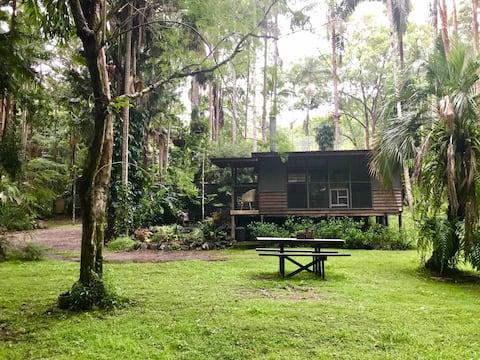 Modern Eco Cabin in Rainforest