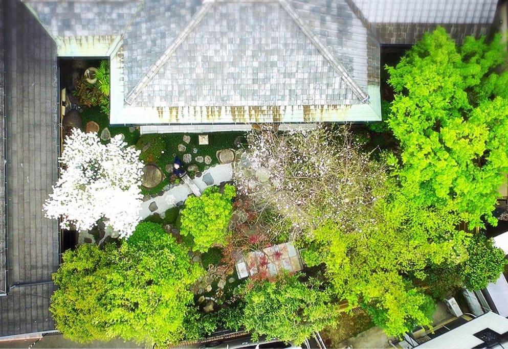 100平米超える広い日本庭園、About 100 square meters japanesegarden .