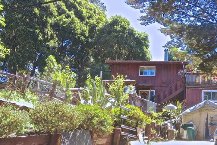 Redwood Mountain Retreat with Canyon Views, Sunset