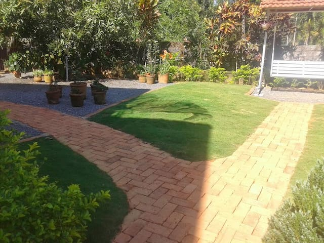 our lawn