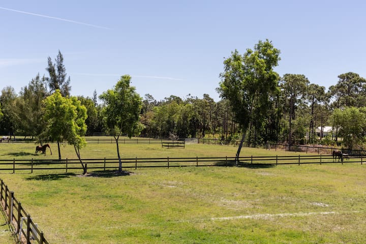 Another view of some paddocks...with our horse Galaxy Guide!