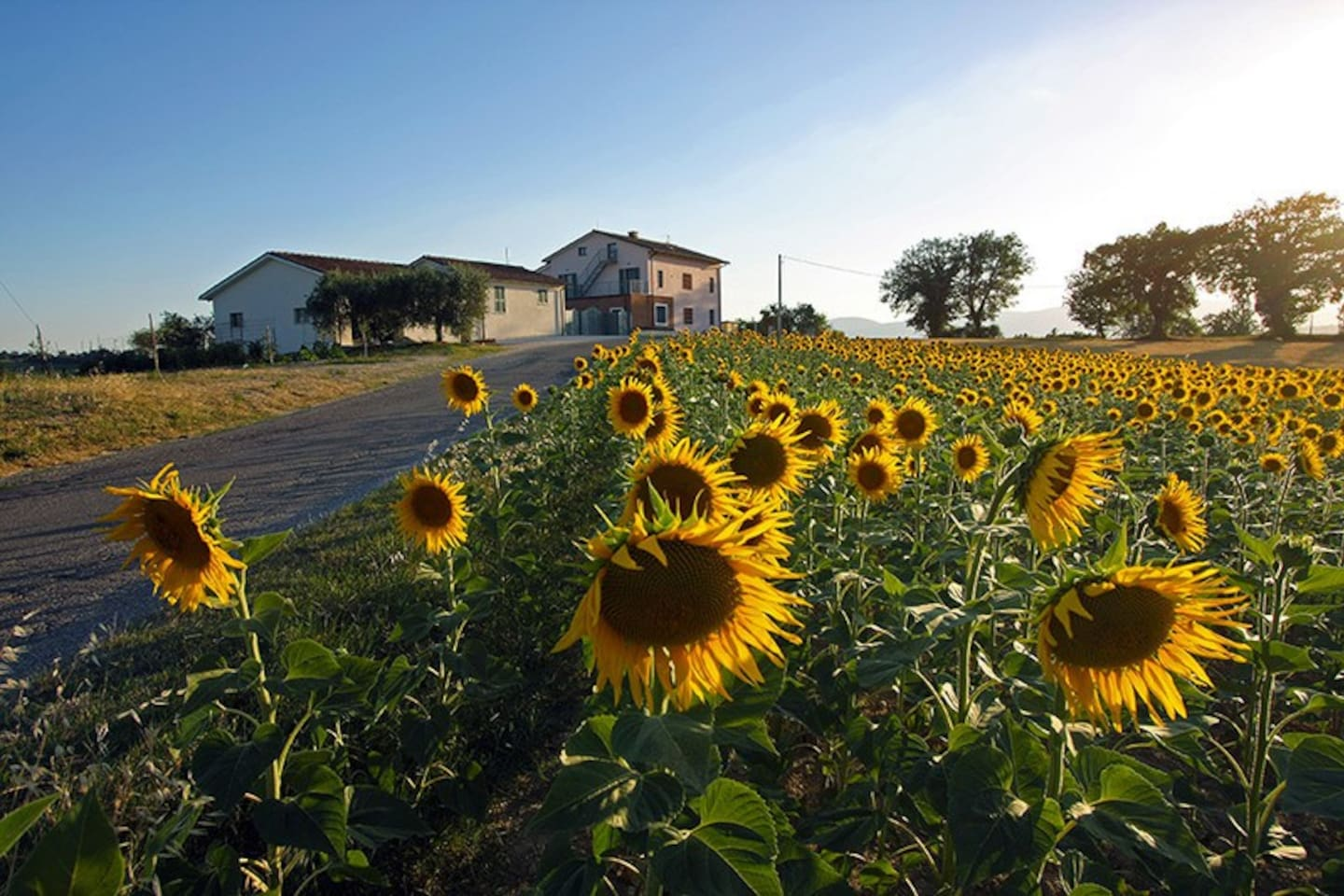 lacollinadelgirasole.it