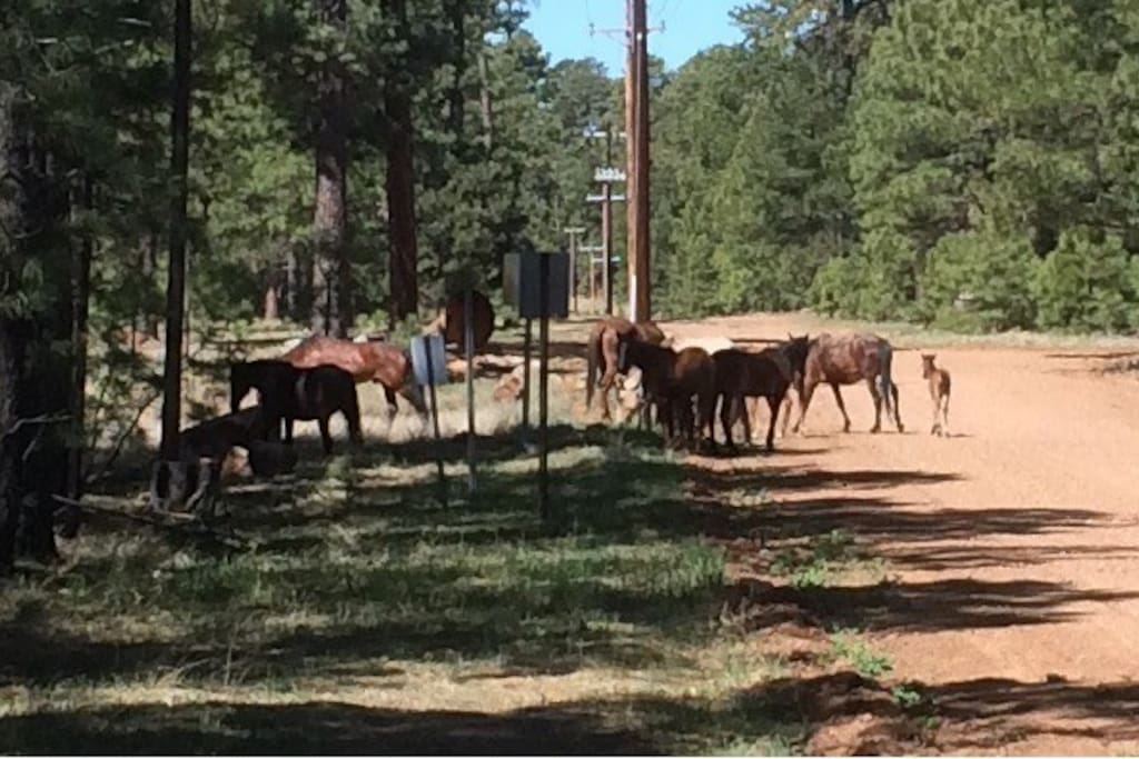 Wild Horses Roaming Nearby