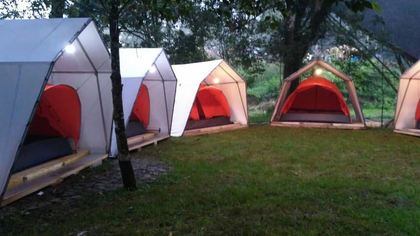 Glamping Hejo Forest Ciwidey Bandung Indonesia
