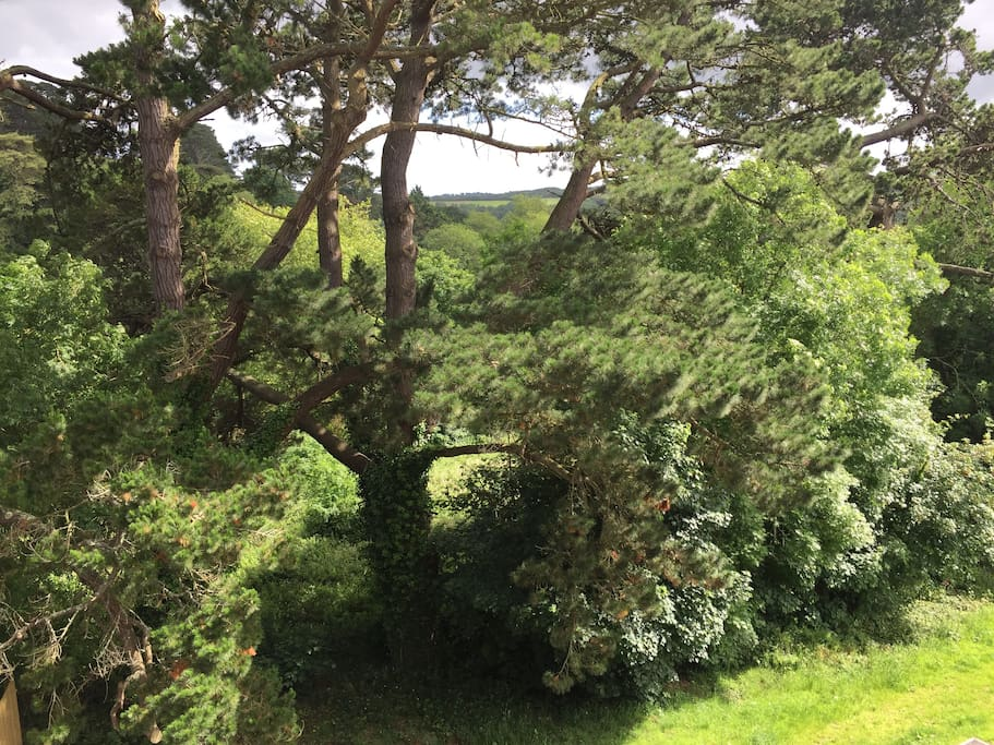 Stunning woodland views taken from our living room velux balcony.