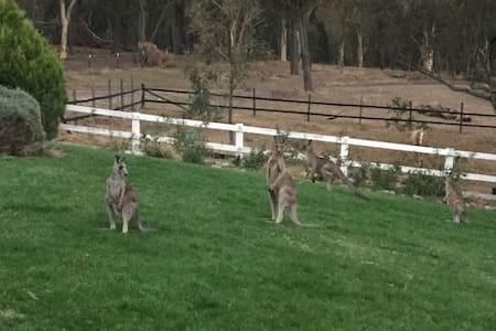 Eaglewood B&B and Alpaca Farmstay - Murrumbateman - Szoba reggelivel