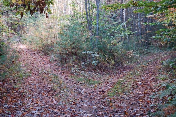Many trails for hiking