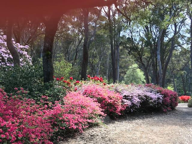 Rhodo gardens - Sept / Oct