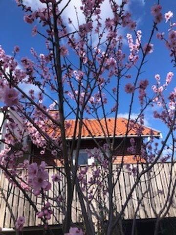Villa apartment with lovely garden