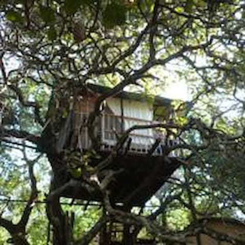 Deluxe Jungle Treehouse