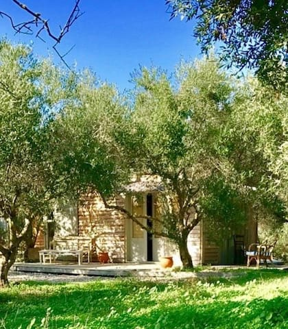 The Olive Shed and Olive Grove - total seclusion..