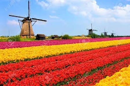 one of the most beautiful end well location place - Lisse