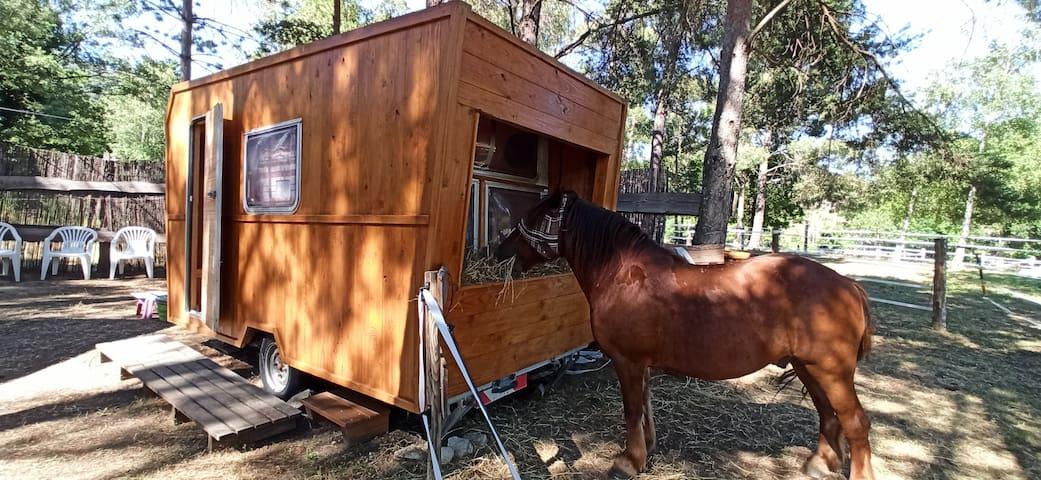 Hébergement insolite cheval loisirs pleine nature