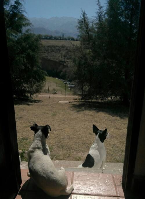 Olivia y Chango nuestras mascotas
