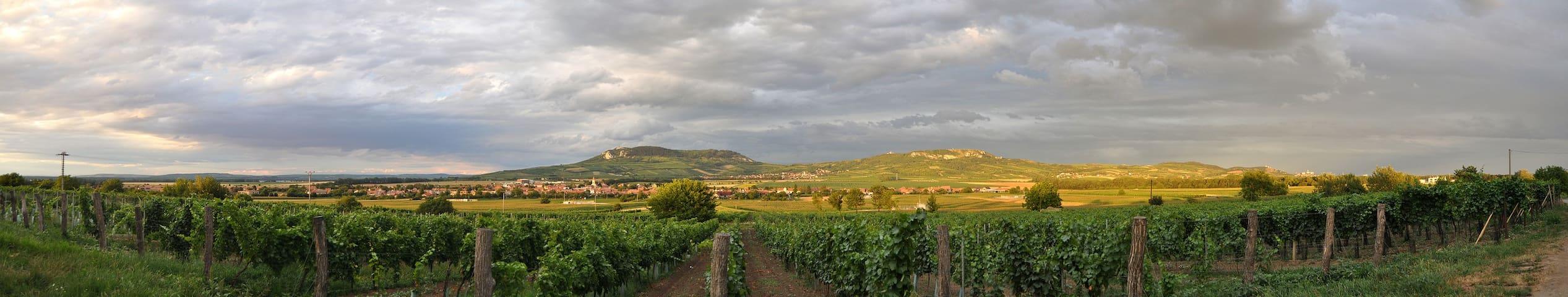 Pálava od vinohradů z Dolních Dunajovic