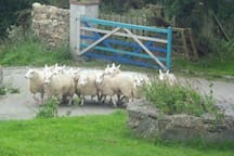 Rush hour in the village