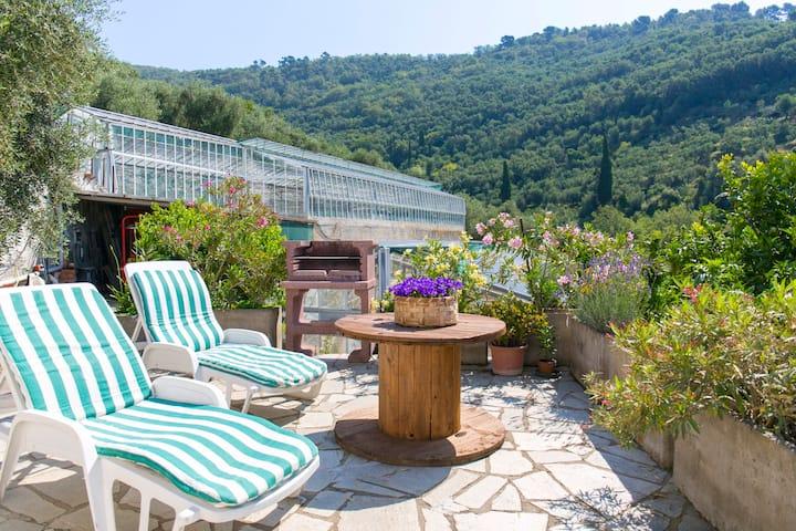 oleandri,relax in a large garden