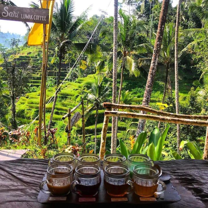 Luwak Coffee Plantation