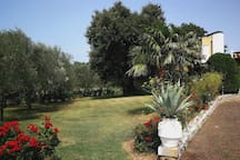 The meadow with the oak tree, the palm tree and the olive trees.