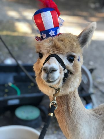 Ernie on the 4th of July!