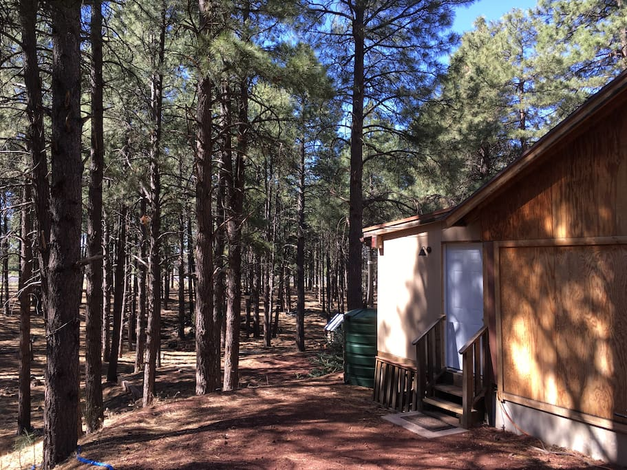 Ponderosa pine forest just outside the front door.