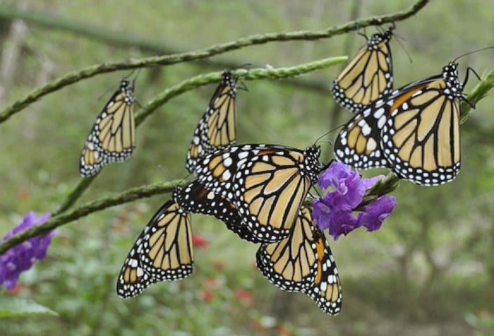 #15P Butterfly garden studio in Escazu ⭐⭐⭐⭐⭐