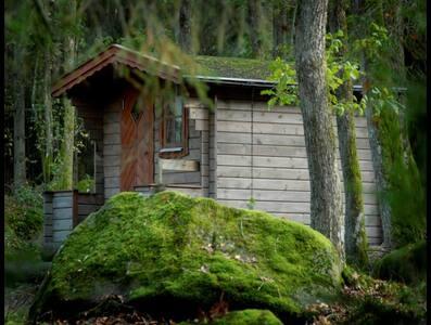 Bara Vila i vildmarksboende vid sjö - Hölseböke