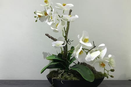 ⭐City Oasis Orchid