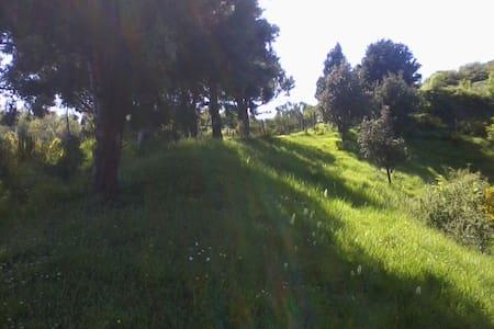 La casetta in collina - Le Prade - Fosdinovo - บ้าน