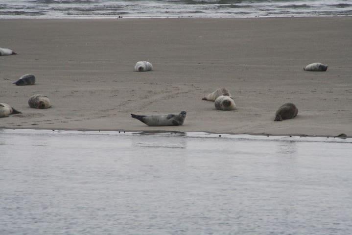 Seehundkolonie auf einer Sandbank mitten im Meer