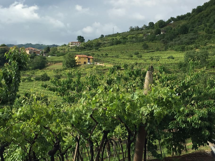 de fantastische ligging in het groen, tussen de wijngaarden