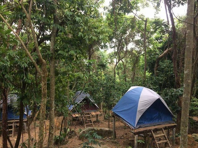 RainForest Camping at Perhentian Island Tent 4