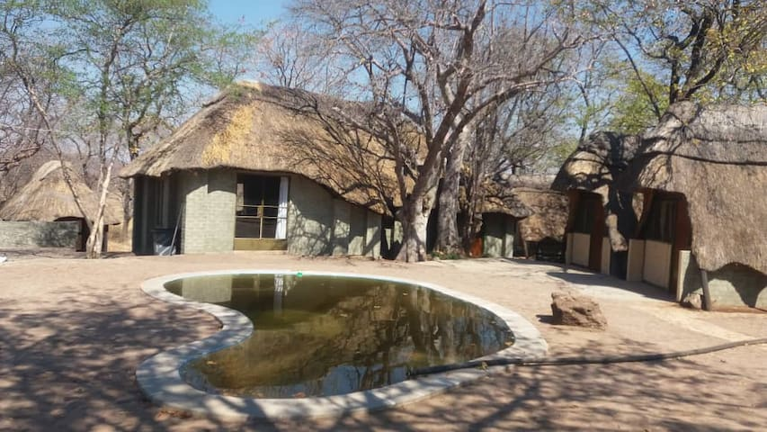 Bush Camping, Transport to/from Vic Falls, Tours 1
