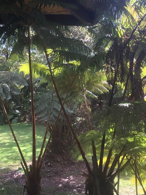 This is the view from the rainforest room! You are nestled in native Hapu'u Pulu trees, which welcome native birds throughout the morning.