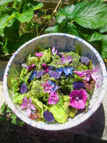 Salade fleurie du Jardin