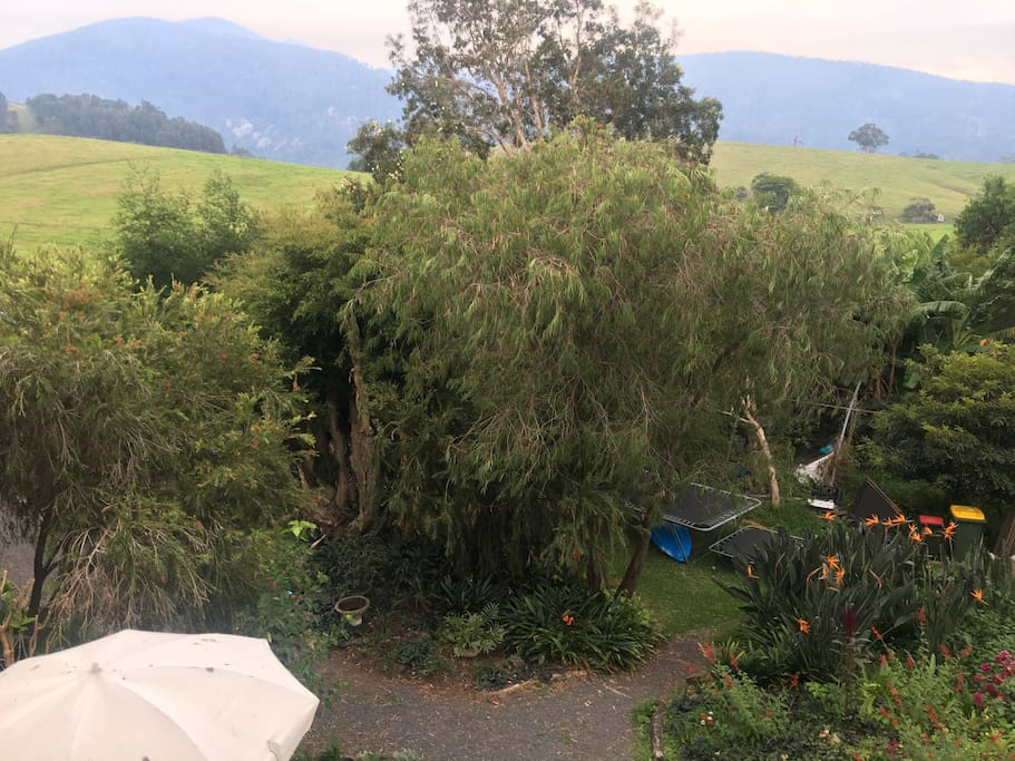 View of the garden and Mt Gulaga in the background!