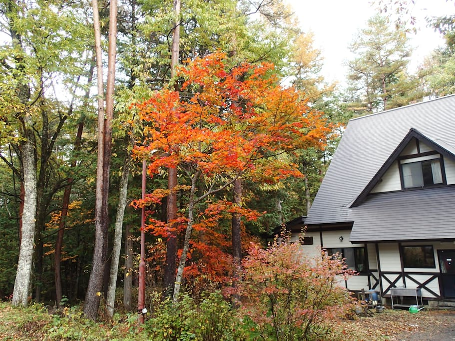 Autumn leaves around on our lodge
