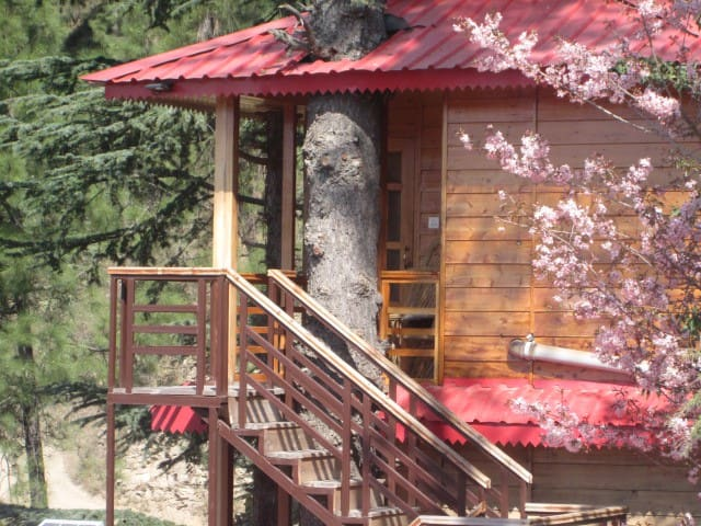 |Tree house|-The golden tulip. - Chail