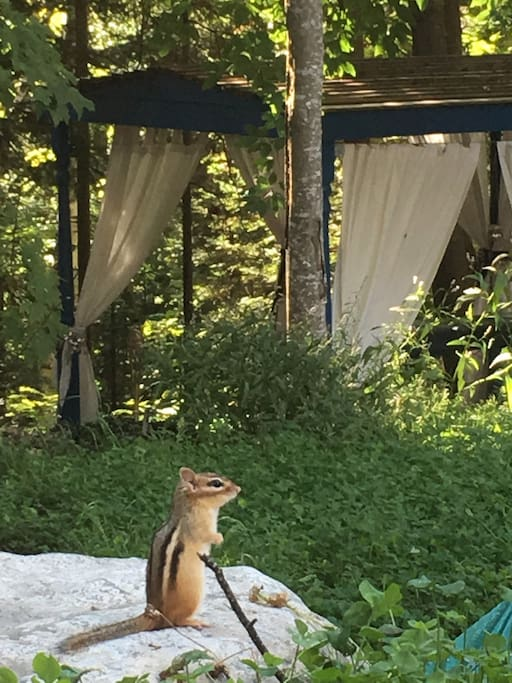 The chipmunks love to have morning tea in the backyard