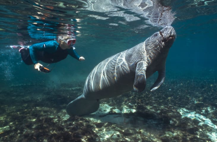 Our guests regularly enjoy close encounters nearby with the friendly manatees !