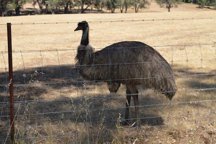 Eddy our friendly Emu