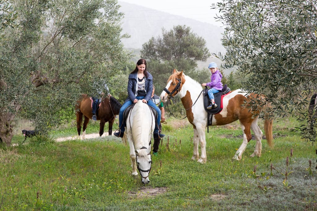 Horse Riding in Nature