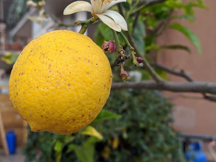 Lemon House ti aspetta a Catania