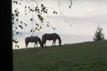 horses right by the house.