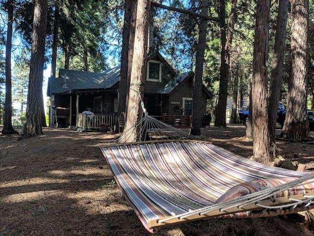 Backyard in daytime.