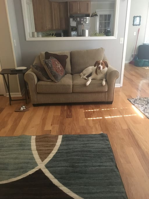 Couches deep cleaned prior to guest arrival, and dogs boarded during stay (unless you want furry cuddles!).