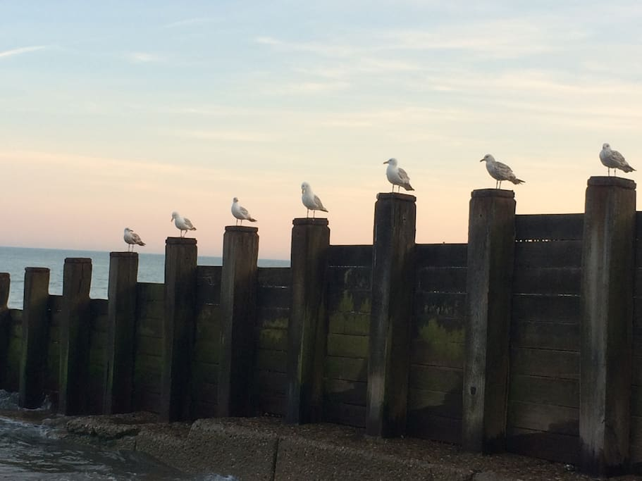 Sea Side attractions
